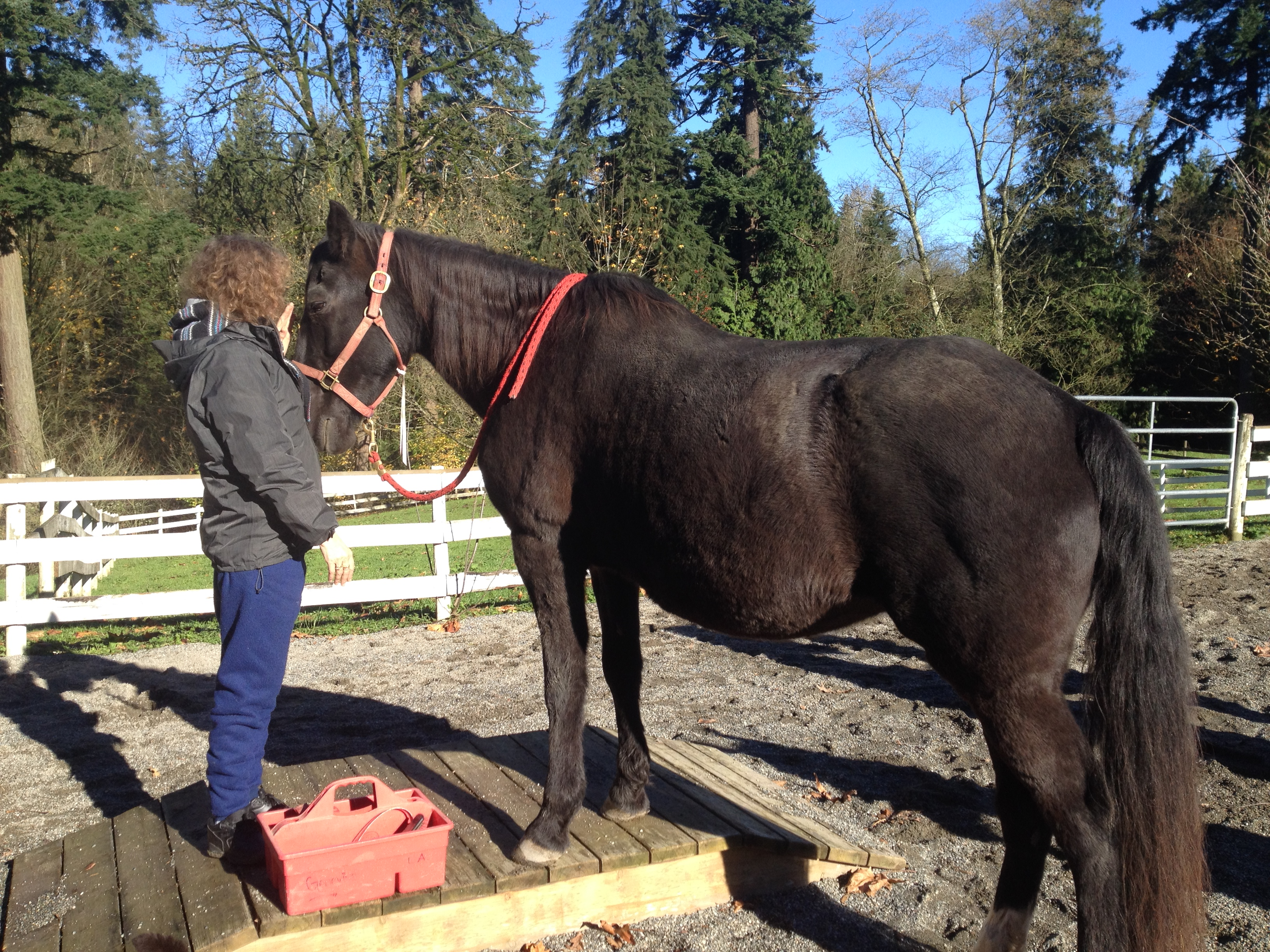 Overcome your addiction with the help of the horses in our addiction recovery program Serenity With Horses